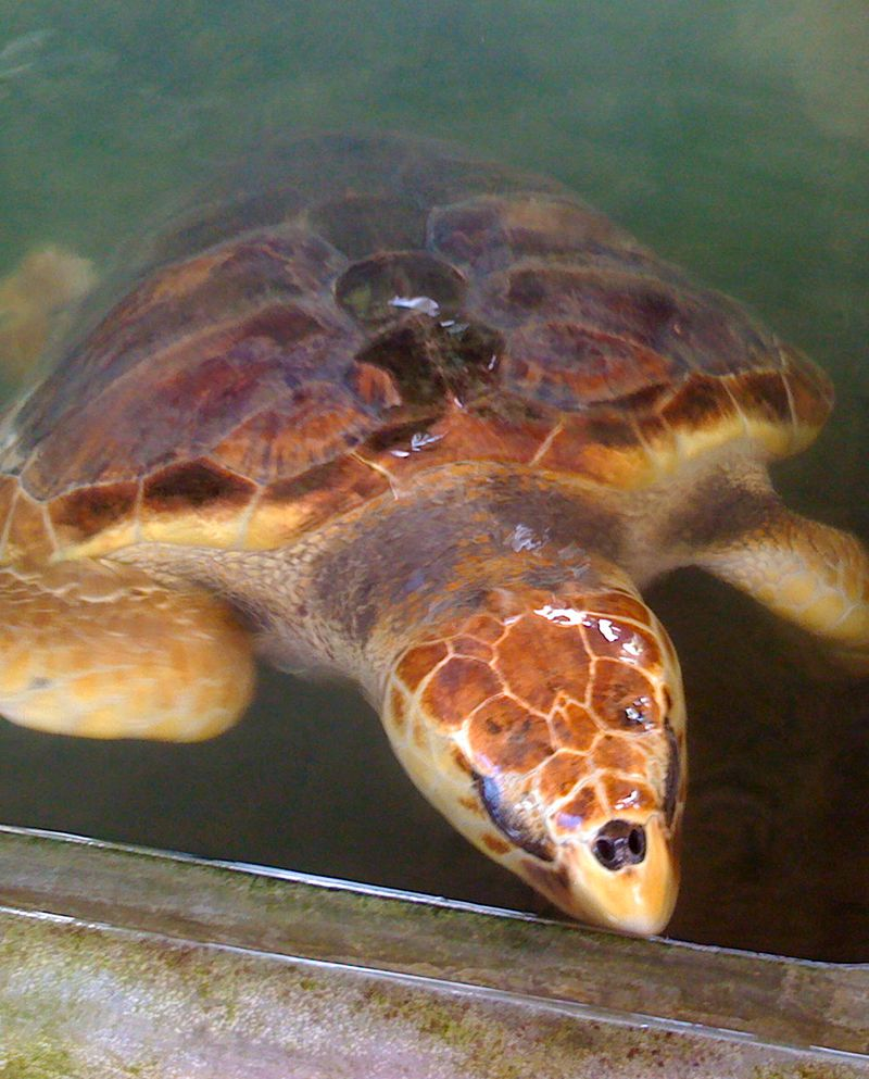Turtle Hatchery and Conservation
